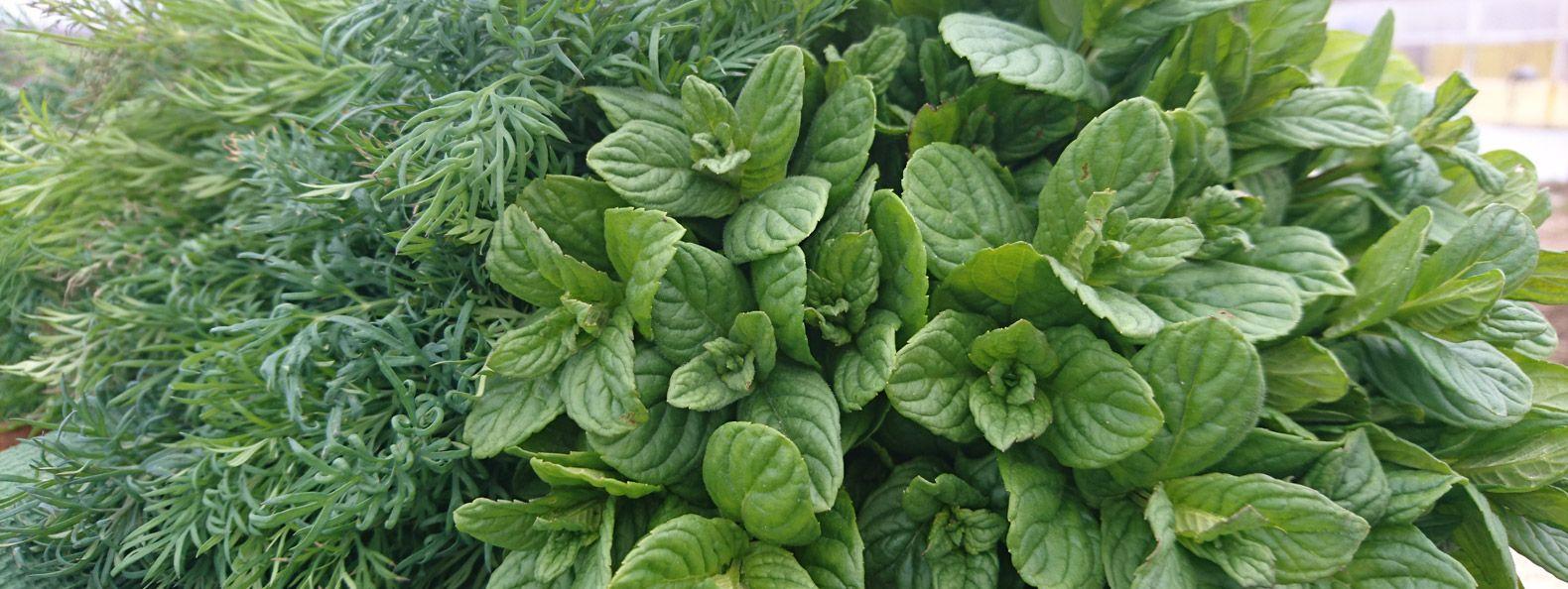 Biyodinamik Organik Tarım: En eski ve en çevreci sürdürülebilir tarım yöntemidir.