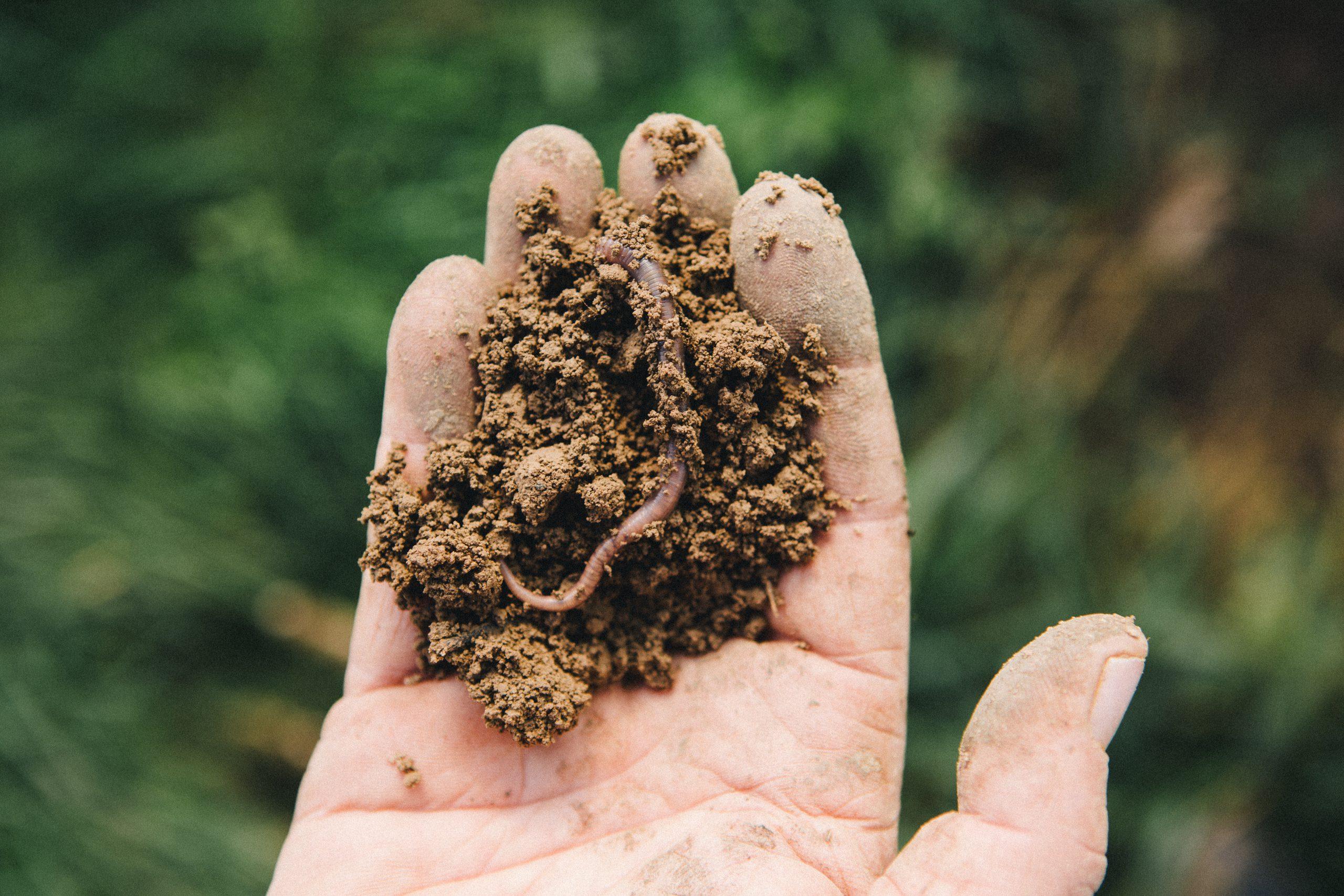 Toprak yeryüzünün diyaframıdır